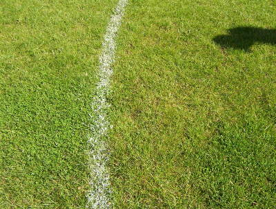 Not a weed in sight - a close up of the superb surface at Borough Park